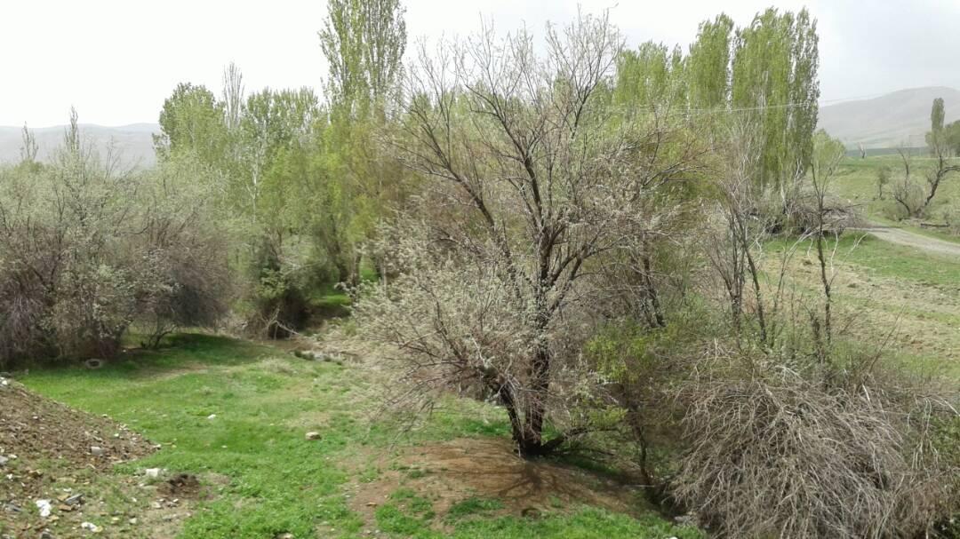 روستای چقاسیاه